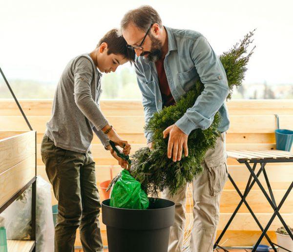 Comment prendre soin de votre sapin pour pouvoir le replanter après les fêtes ?