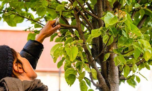 48h de l'agriculture urbaine : 6 initiatives gourmandes et généreuses pour végétaliser votre ville