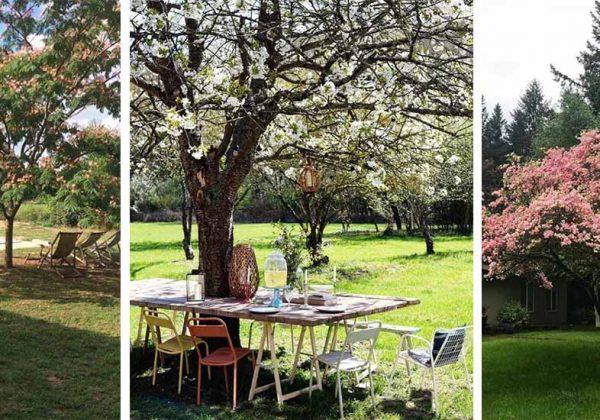 6 beaux arbres qui font de l\'ombre dans le jardin conseillés par des ...