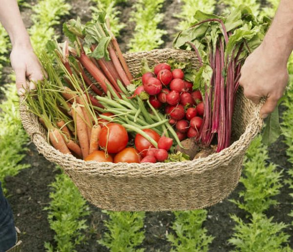 Comment trouver facilement un jardin partagé près de chez soi ?