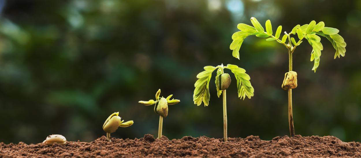 Faites pousser des arbres à partir des pépins, graines et noyaux !
