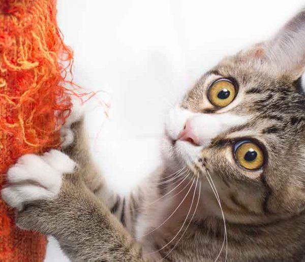 Comment sauver votre canapé des griffes de votre chat ?