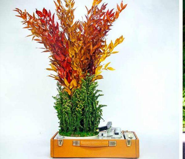 Des tourne-disques élaborés avec des plantes ? L'idée folle de Monsieur Plant