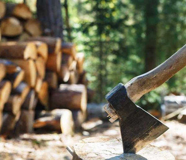 Le saviez-vous ? Vous avez le droit d'aller couper du bois de chauffage en forêt !