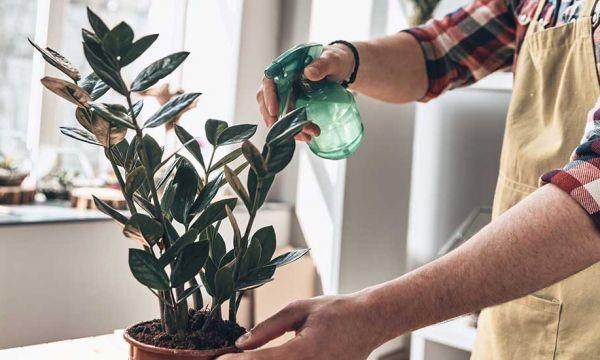 Comment bien arroser vos plantes d'intérieur (et éviter qu'elles ne meurent)