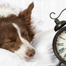 Nos conseils pour vous lever du bon pied un lundi matin, car oui, c'est possible !