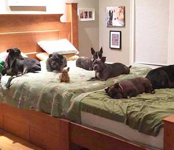 Ils ont construit un lit géant pour dormir avec leurs 8 chiens !