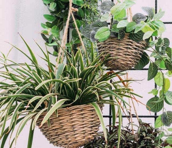 Choisissez les bonnes plantes pour votre salle de bains !
