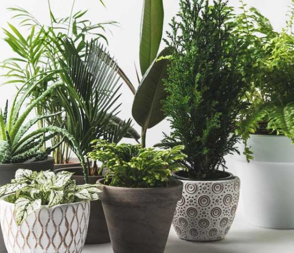 Quelles plantes d'intérieur peuvent être dangereuses pour vos enfants ?