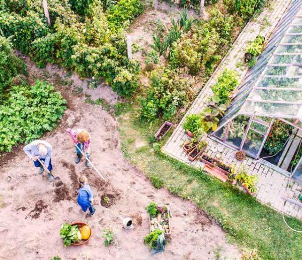 Comment planifier votre année au potager pour de beaux légumes sans efforts ?