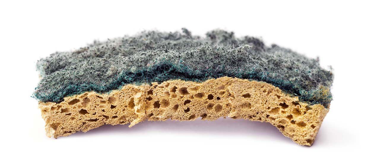 Alerte bactéries : à quelle fréquence changer votre éponge ?