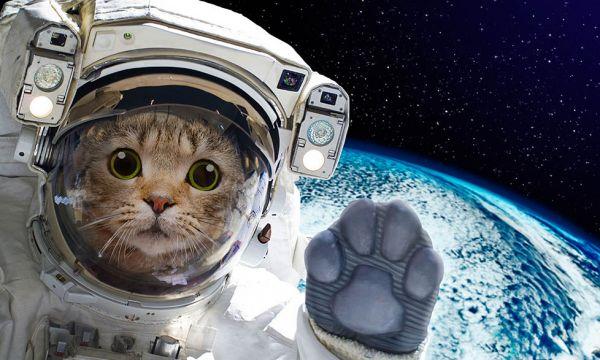 Comment aménager la navette spatiale qui vous amènera sur Mars ?