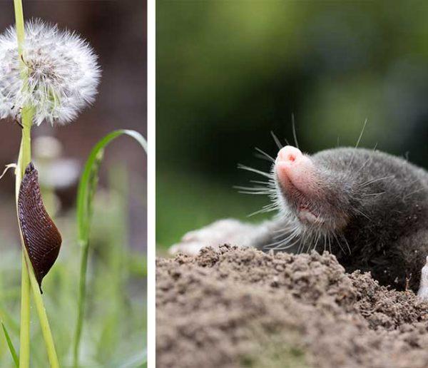 Ne les tuez pas, ils sont utiles au jardin !