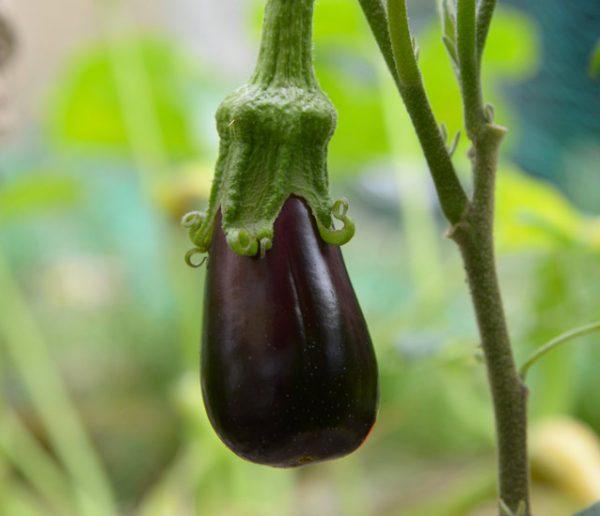 Voici comment faire pousser des mini légumes sur votre balcon ou dans le salon !