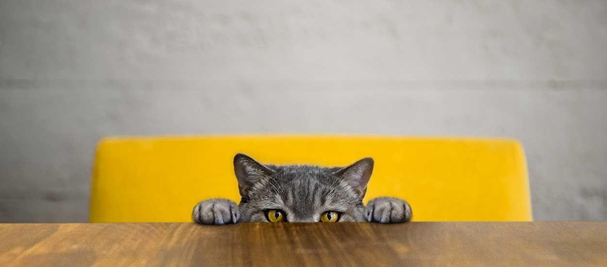 Votre chat acceptera-t-il enfin de vous laisser dormir ?