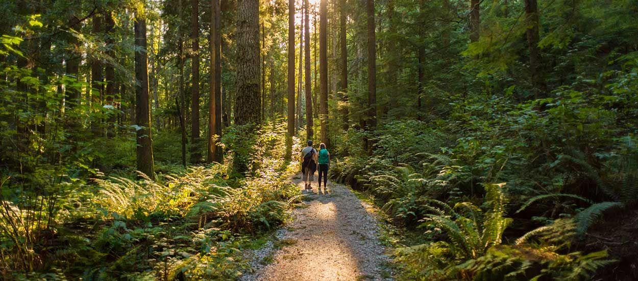 EcoTree : Achetez des arbres pour réduire les émissions de CO2 et sauver les forêts