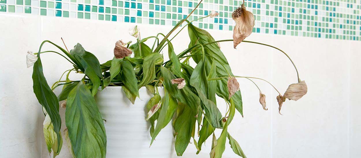 La clinique des plantes : diagnostic gratuit en ligne pour sauver vos plantes !