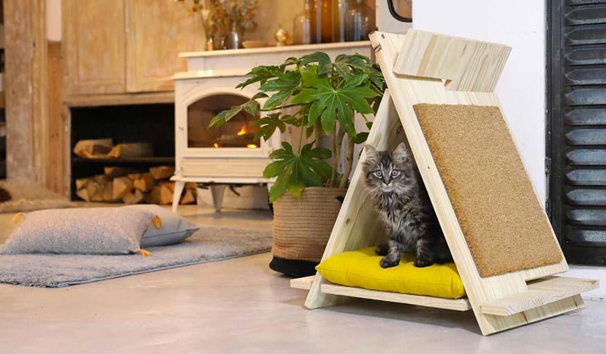 Comment Sécuriser Vos Fenêtres Pour Que Votre Chat Ne Tombe Pas