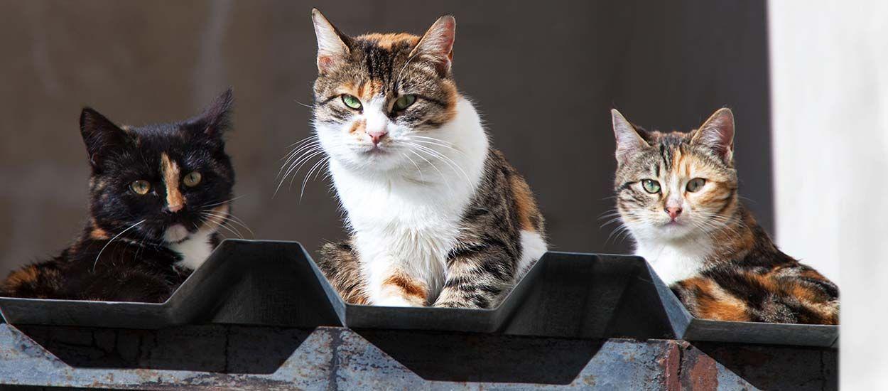 Des bénévoles ont fabriqué des maisons pour héberger les chats errants