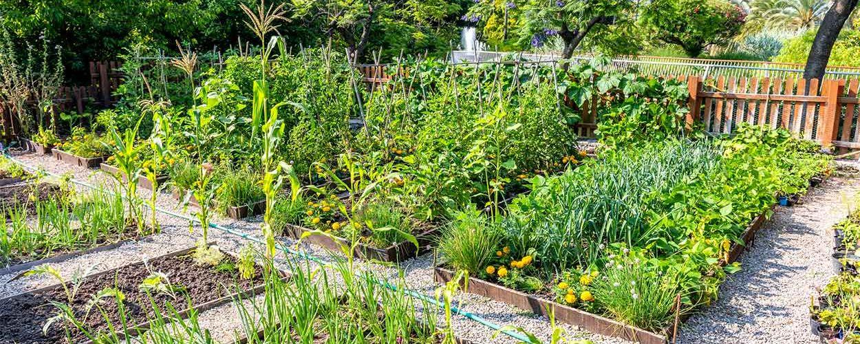 Que faire de vos restes de pesticides pour protéger l'environnement ?