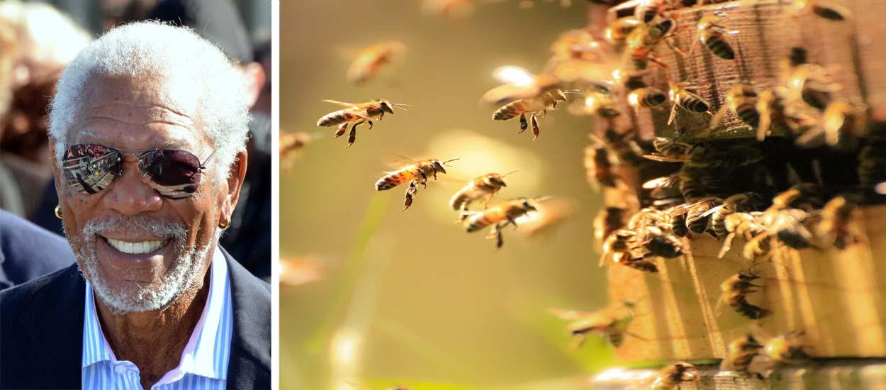 Morgan Freeman fait de son ranch un refuge pour les abeilles