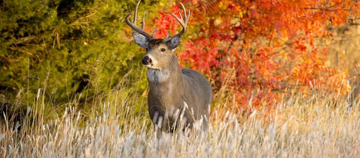 Chasse à courre : les grands animaux ne pourront plus être abattus dans votre jardin