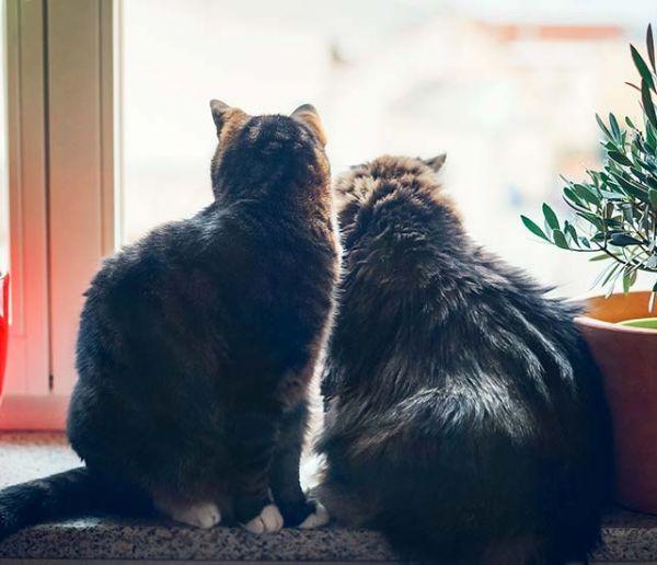 Comment empêcher mon chat de sauter du balcon ou par la fenêtre ?