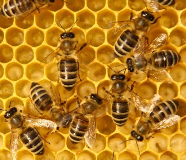 Les 200 000 abeilles de la cathédrale Notre-Dame sont sauvées !