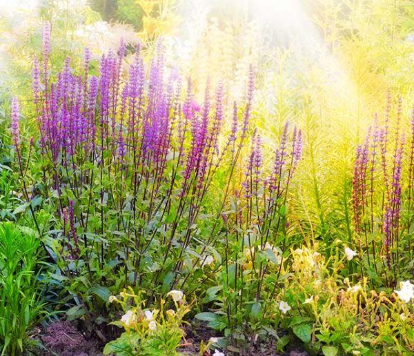Suivez ces proverbes et croyances sur les plantes et vous deviendrez riche et heureux