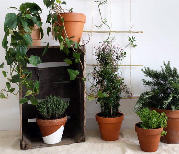 Tuto : Fabriquez un treillis tendance en bambou pour vos plantes grimpantes