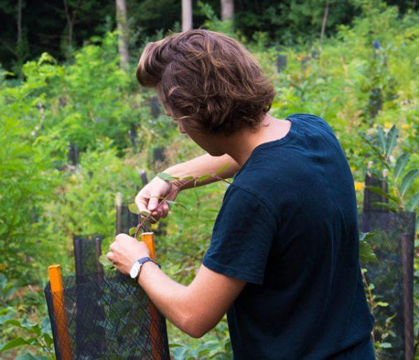 Ils plantent un arbre à votre place pour trois euros et luttent contre la pollution