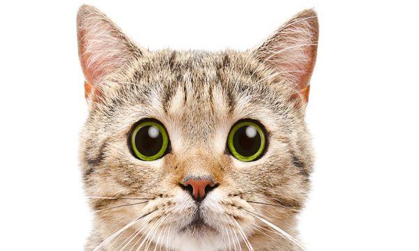 Comment convaincre son conjoint d'avoir un chat ?