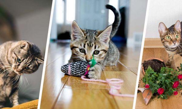 Les chats peuvent-ils être heureux en appartement ?