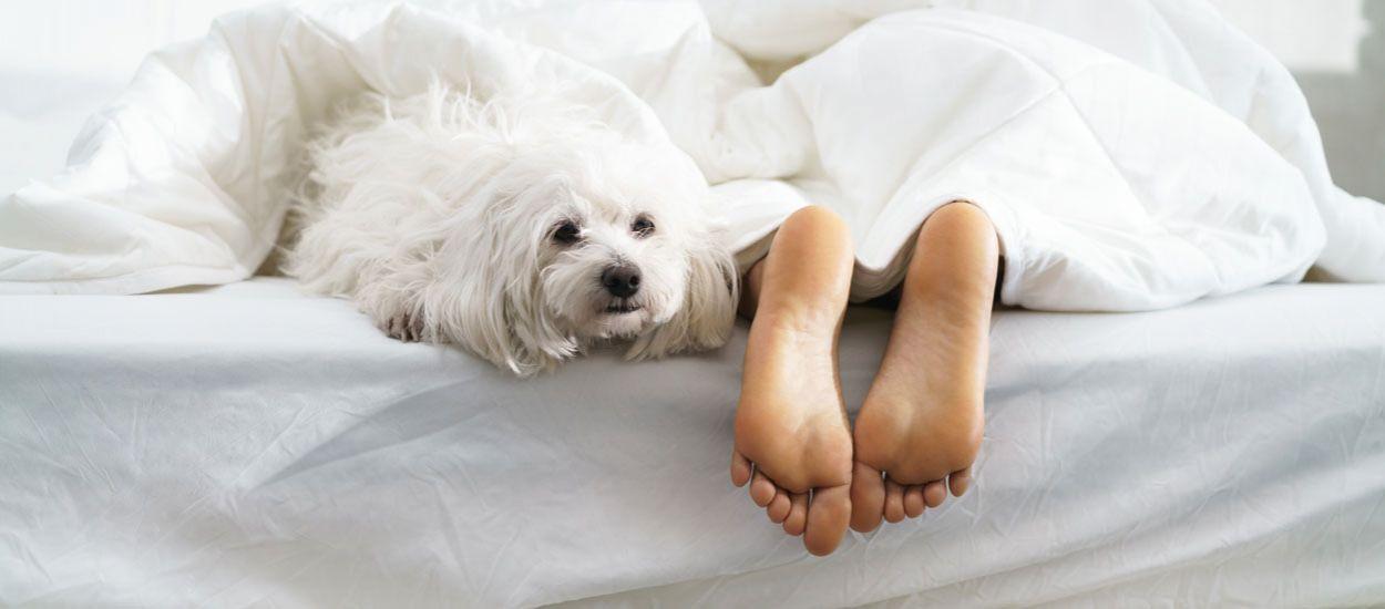 Les femmes dorment mieux avec un chien qu'avec un être humain, c'est la science qui le dit !