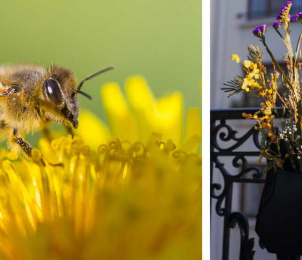 Nourrissez les abeilles sur votre balcon avec ce kit de fleurs à planter