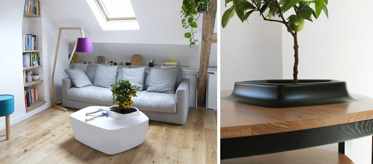 La nouvelle tendance : faire pousser un arbre sur sa table basse !