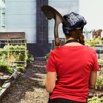 Potager agriculture urbaine toit végétalisé jardin