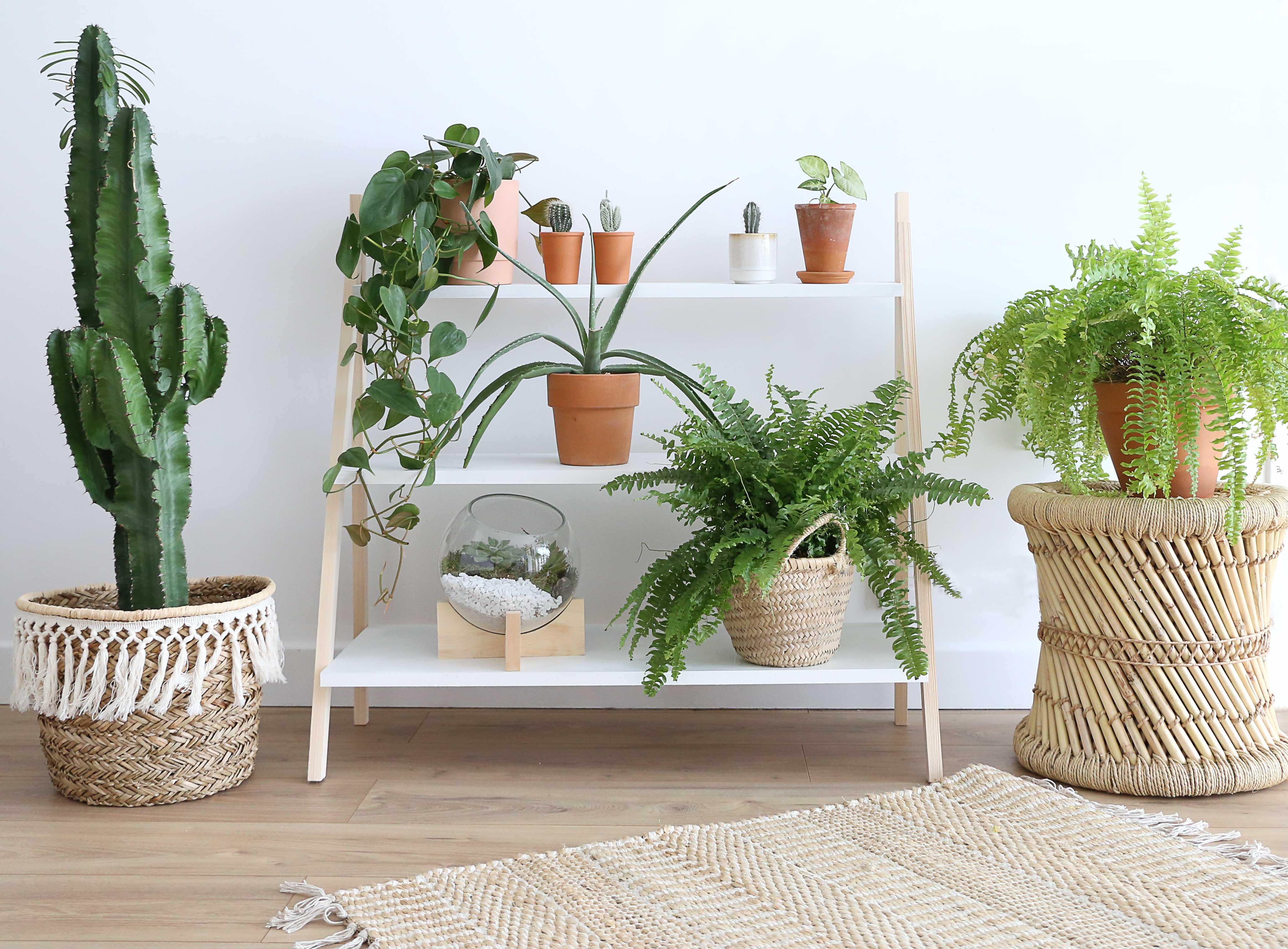 Fabriquer Une Étagère Pour Plantes tuto : créez une étagère tendance pour poser vos plantes d