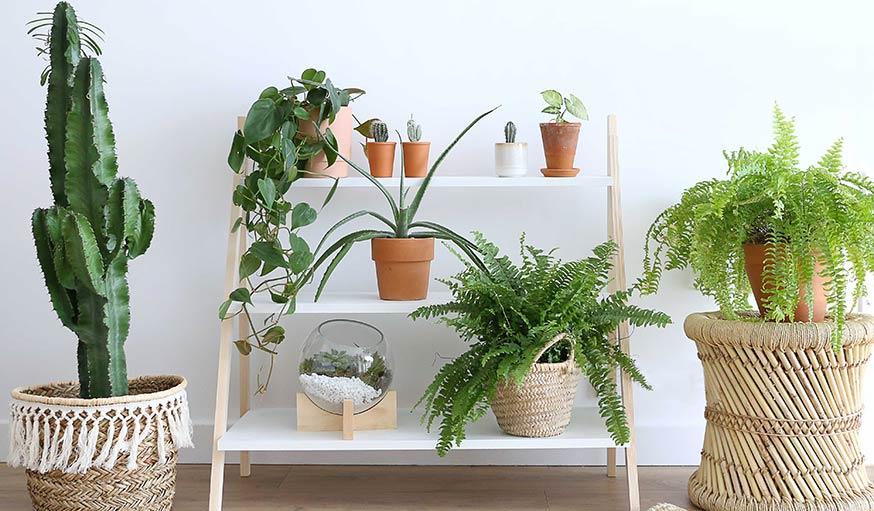 Le résultat de l'étagère pour plantes