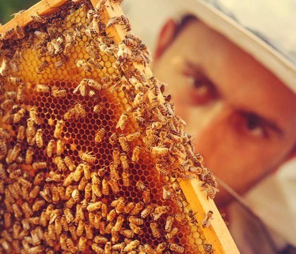 Pour venir en aide aux apiculteurs, parrainez ces ruches connectées  !