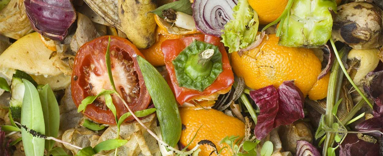 Quels déchets mettre dans votre lombricomposteur et autres questions essentielles