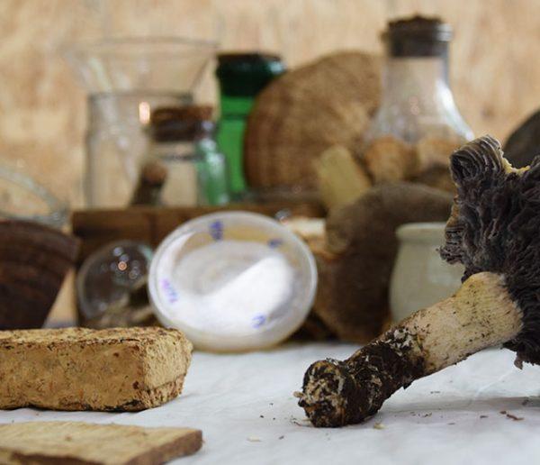 Cette entreprise française fait pousser des champignons pour remplacer le plastique