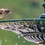 oiseaux abreuvoir balcon jardin
