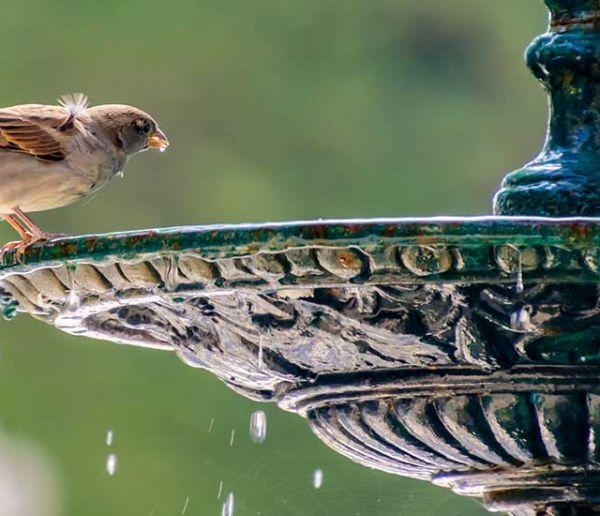 Voici comment venir en aide aux oiseaux pendant la canicule, en ville comme à la campagne