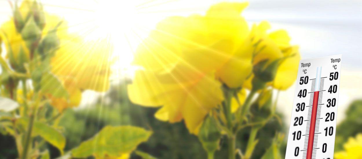 Comment protéger votre jardin en période de canicule ?