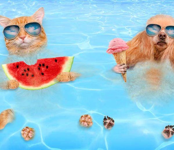Votre chien peut-il se baigner sans danger dans votre piscine ?