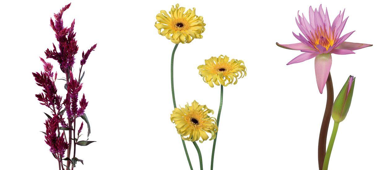Le guide pour choisir les fleurs de votre jardin par gamme de couleur