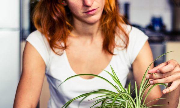 Pourquoi les feuilles de vos plantes d'intérieur jaunissent (et comment les soigner) ?