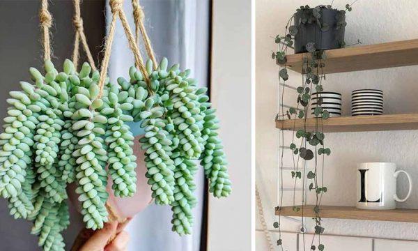 7 idées de plantes tendance à mettre dans vos suspensions