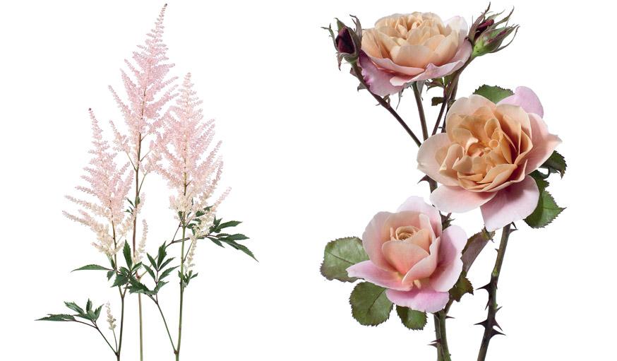 jardin coloré fleuri